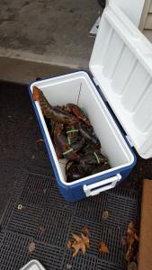 Kitchen Warming Crustaceans